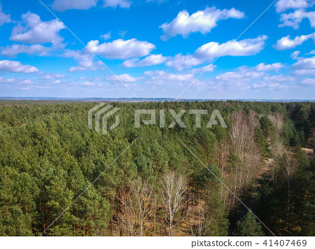 Aerial top view of the forest in spring time 41407469