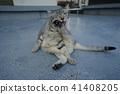 고양이, 고양이과, 동물 41408205