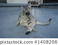고양이, 고양이과, 동물 41408206