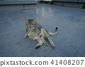 고양이, 고양이과, 동물 41408207