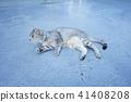 고양이, 고양이과, 동물 41408208