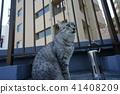 고양이, 고양이과, 동물 41408209