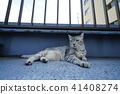 고양이, 고양이과, 동물 41408274