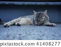 고양이, 고양이과, 동물 41408277