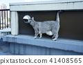 고양이, 동물, 애니멀 41408565