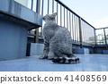 고양이, 동물, 애니멀 41408569