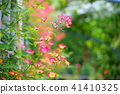 꽃, 플라워, 장미 41410325