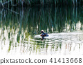 Beautiful duck in water reflections 41413668