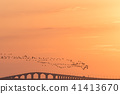 Migrating Brent Geese by a bridge in sunset 41413670