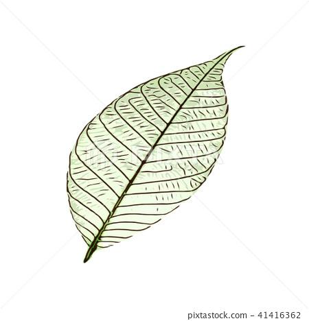 natural leaves design. leaf vector illustration 41416362