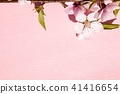 Beautiful peach blossom on pink background under s 41416654