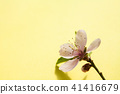 Peach flower branch on yellow space background  41416679