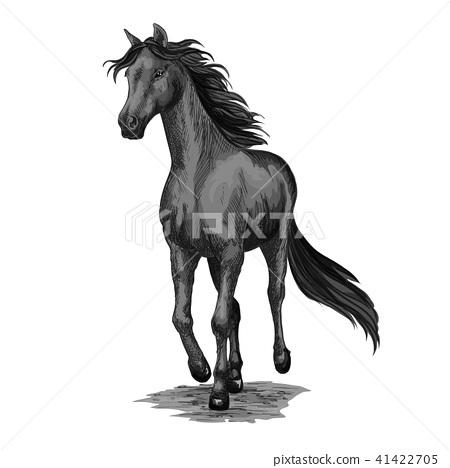 Horse running sketch of galloping black stallion 41422705