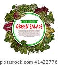 vegetable vector leaf 41422776