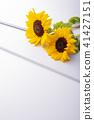 向日葵 花朵 花 41427151