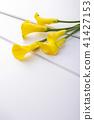 彩色 顏色 花朵 41427153