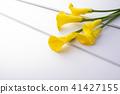 彩色 顏色 花朵 41427155
