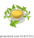 nettle, herbal, herb 41427251