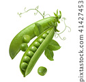 Green peas in open pod isolated on white  41427453