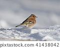 鸟儿 鸟 冬天 41438042