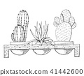 Sketch of three succulents in pots 41442600