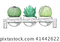 Sketch three succulents in pots on a wooden stand 41442622