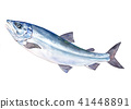 Salmon water color illustration 41448891