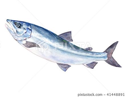 三文魚跳水彩插圖 41448891