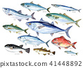 saltwater fish, blue fish, aquarelle 41448892
