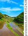 ภูมิทัศน์ไม้ไผ่ของระเบียงข้าวฮามานูรา [จังหวัดซาก] 41452428