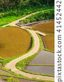 ภูมิทัศน์ไม้ไผ่ของระเบียงข้าวฮามานูรา [จังหวัดซาก] 41452442