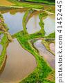 ภูมิทัศน์ไม้ไผ่ของระเบียงข้าวฮามานูรา [จังหวัดซาก] 41452445