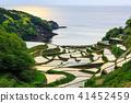 Bamboo landscape of rice terrace of Hamanoura [Saga Prefecture] 41452459