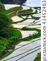ภูมิทัศน์ไม้ไผ่ของระเบียงข้าวฮามานูรา [จังหวัดซาก] 41452463