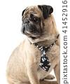 dog pug in tie 41452916