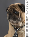 dog pug in a tie 41452917