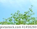 tender, green, verdure 41456260