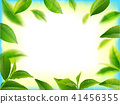 Green tea leaves vector nature background. 41456355