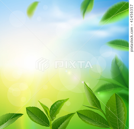 Green tea leaves vector nature background. 41456357