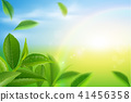 ชา,สีเขียว,เขียว 41456358