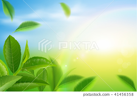 Green tea leaves vector nature background. 41456358
