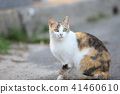 Cat cat lovely tortoiseshell cat 41460610