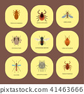 insect, parasite, vector 41463666