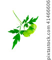 Close up of Balloon vine plant on white background 41466606