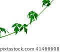 Close up of Balloon vine plant on white background 41466608