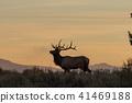 elk, deer, animal 41469188