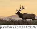 elk, deer, animal 41469192