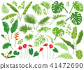 Tropical Leaves and Flowers Big Set 41472690