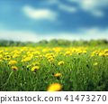 field of spring flowers and perfect sky 41473270
