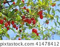 깜짝 구미의 열매 41478412
